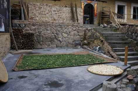 Séchage des feuilles de thé -
