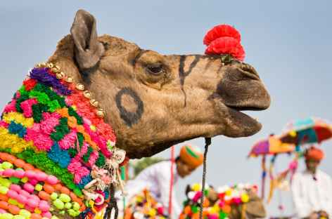 Foire aux chameaux de Pushkar - Rajasthan -