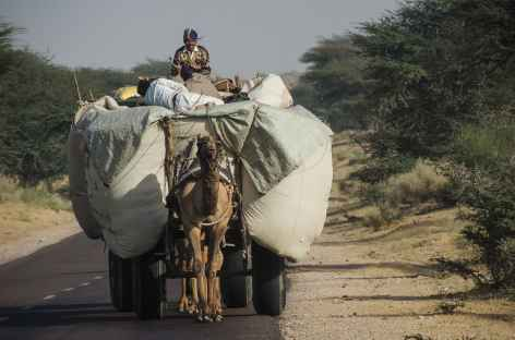 Sur les routes du Rajasthan, Inde -
