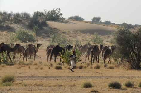 Eleveur de chameaux à Jaisalmer - Rajasthan, Inde -