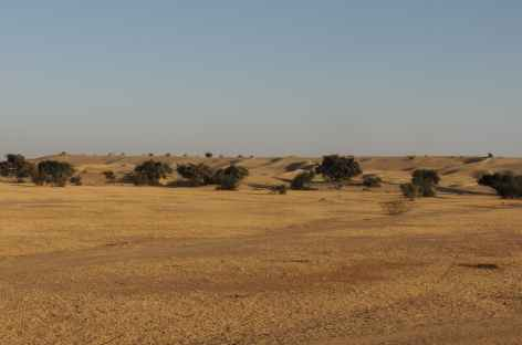 Le désert est en vue ! Rajasthan, Inde  -