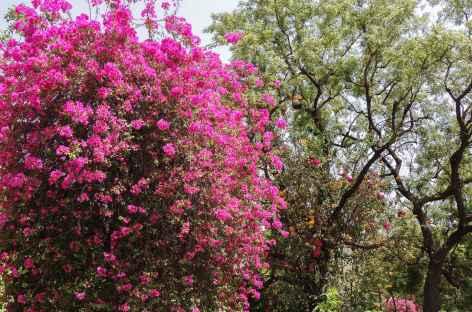 En arrivant à Adinath, Rajasthan -