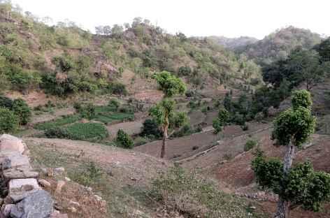 Dans les collines des Araveli, Rajasthan, Inde -