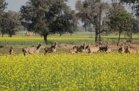 Rencontre dans la campagne, Rajasthan, Inde -