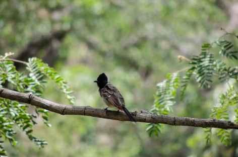 Oiseau dans les Araveli, Rajasthan, Inde -