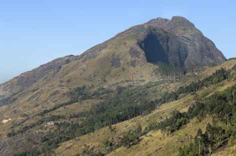 Trek avec ascension du Mesapulimalai, Kerala, Inde du Sud -