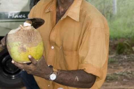 Un bon jus de coco avant de repartir -