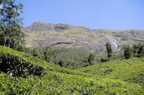 Vers le sommets du Mesapulimalai, région de Munnar, Inde du Sud -