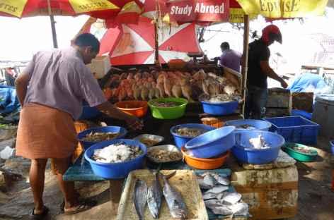 Poissonier vendant son poisson - Inde du sud -