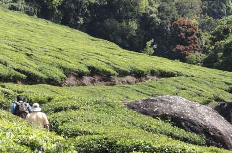 En randonnées, Inde du Sud -