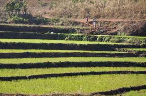 Cultures en terrasses - Orissa, Inde -
