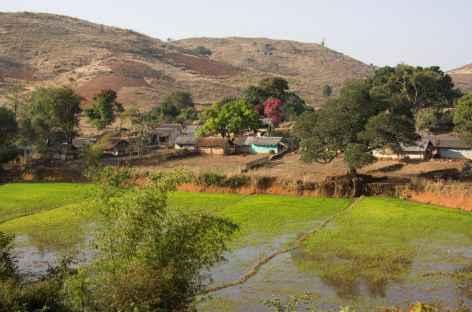 Campagne d'Orissa - Inde -