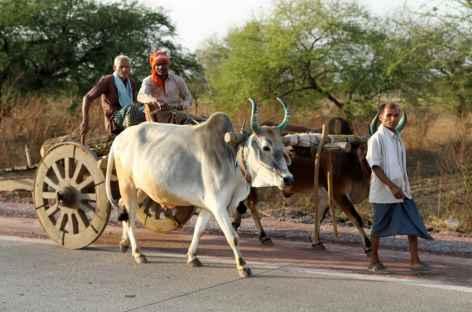 Char à boeufs - Orissa, Inde -
