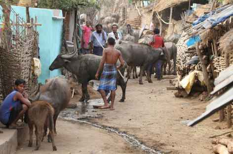 Village Khonda - Orissa, Inde -