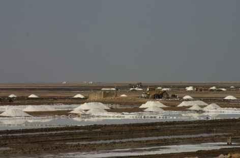 Collecte du sel au Rann du Kutch -