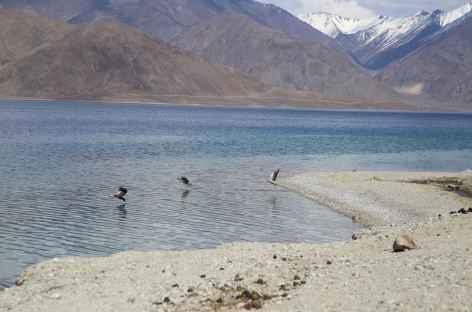 Lac Pongong Tso - Ladakh, Inde -