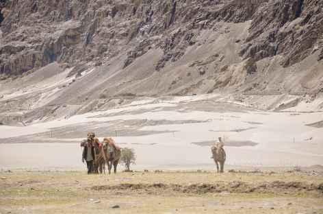 Les chameaux de Bactriane - Vallée de la Nubra -