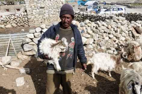 Moutonnier - Ladakh, Inde -