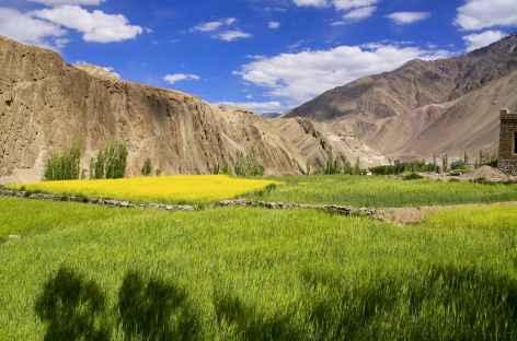 Dans la campagne de la vallée de l'Indus - Ladakh - Inde -