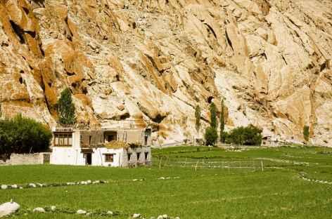 Les champs de Latho , Ladakh - Inde -