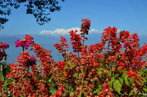 Parc Shruberry, Darjeeling -