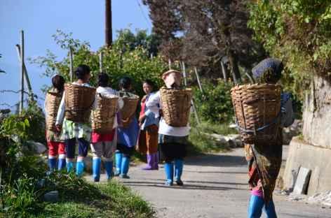 Cueilleuses de thé, Darjeeling -