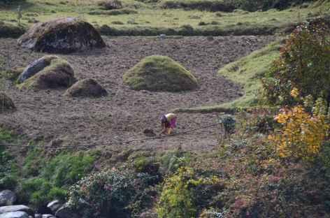 Travail au champ, Sikkim -