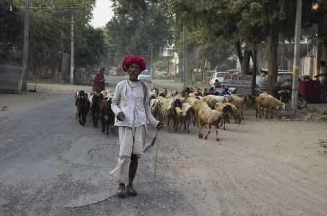 Portrait d'éleveur de chèvres, désert du Thar -