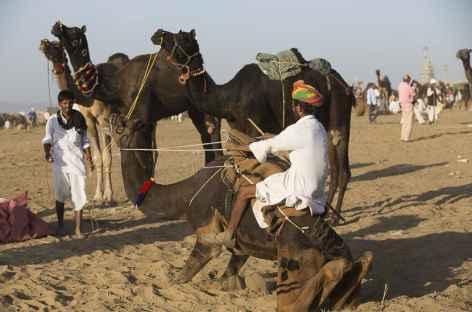 Pushkar -