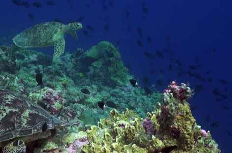 Fonds marins à Wakatobi - Indonésie -