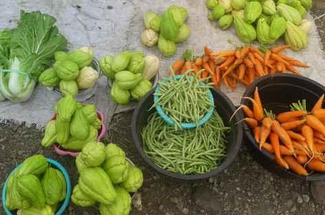 Dans la campagne Ngada, Flores - Indonésie -