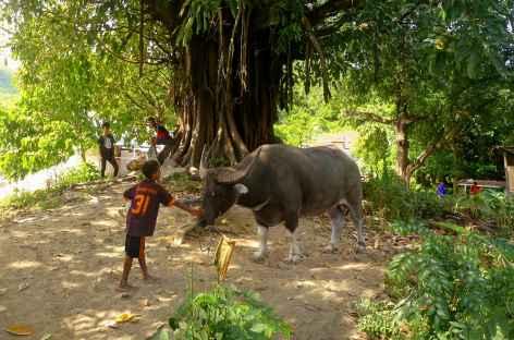 Balade sur la petite île de Palue - Indonésie -