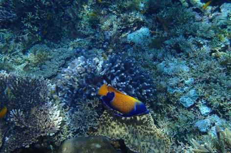 Riches fonds marins d'Indonésie -