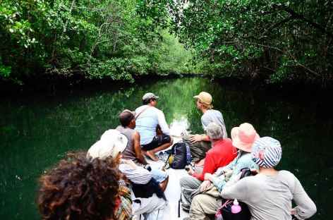 Remontée d'un cours d'eau, au coeur de la mangrove, île de Batanta - Indonésie -