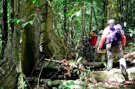Marche vers la cascade, île de Batanta, Raja Ampat - Indonésie -