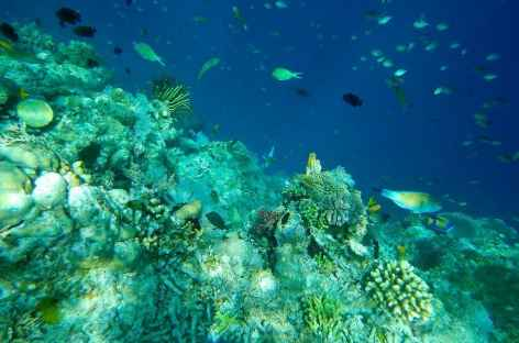 Les raja Ampat, un aquarium polychrome - Indonésie -