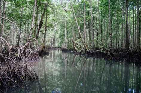 Forêt primaire,  île de Batanta, Raja Ampat - Indonésie -