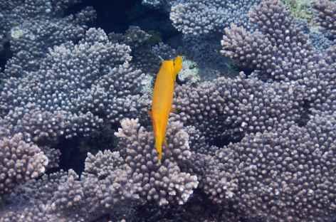 Snorkeling, Raja Ampat - Indonésie -
