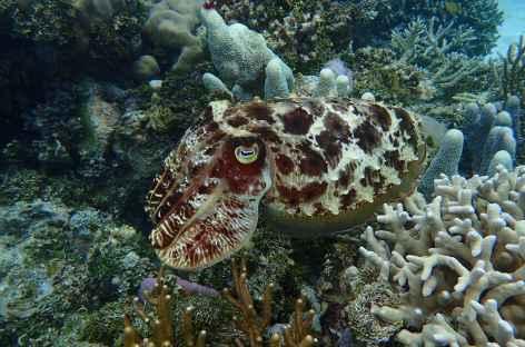 Superbes fonds marins d'Indonésie -