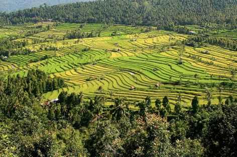 Rizières en terrasses de Munduk, Bali - Indonésie -