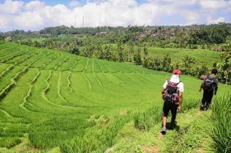 Océan de rizières vers Belimbing, Bali - Indonésie -