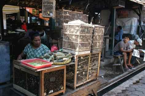 Marché aux oiseaux de Jogja, Java - Indonésie -