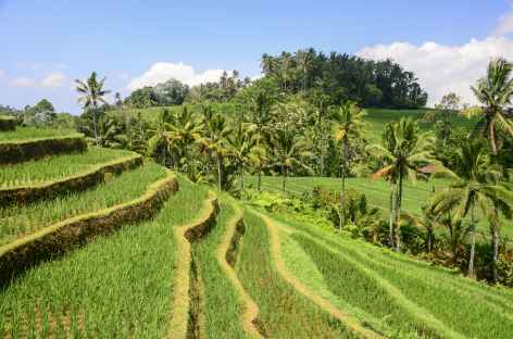 Rizières en terrasses de Belimbing, Bali - Indonésie -