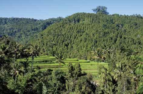 Paysages de Bali - Indonésie -