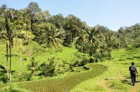 Vers le village de Belimbing, Bali - Indonésie -