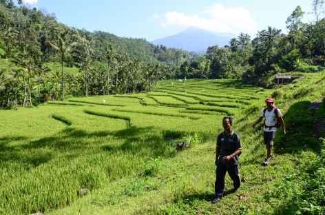 Marche dans les rizières de Belimbing, au loin le volcan Batukaru, Bali - Indonésie -