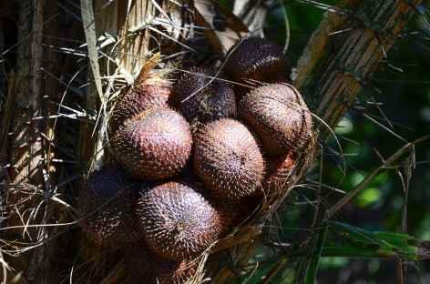 Salaks ou fruits du dragon, Bali - Indonésie -