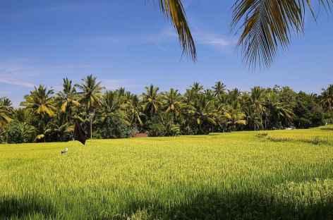Dans les environs d'Ubud, Bali - Indonésie -