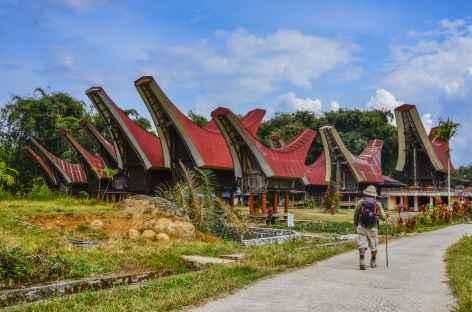 Marche vers Batutumonga, Pays Toraja, Sulawesi - Indonésie -