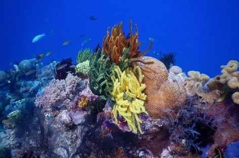 Archipel de Komodo, un aquarium polychrome ! -